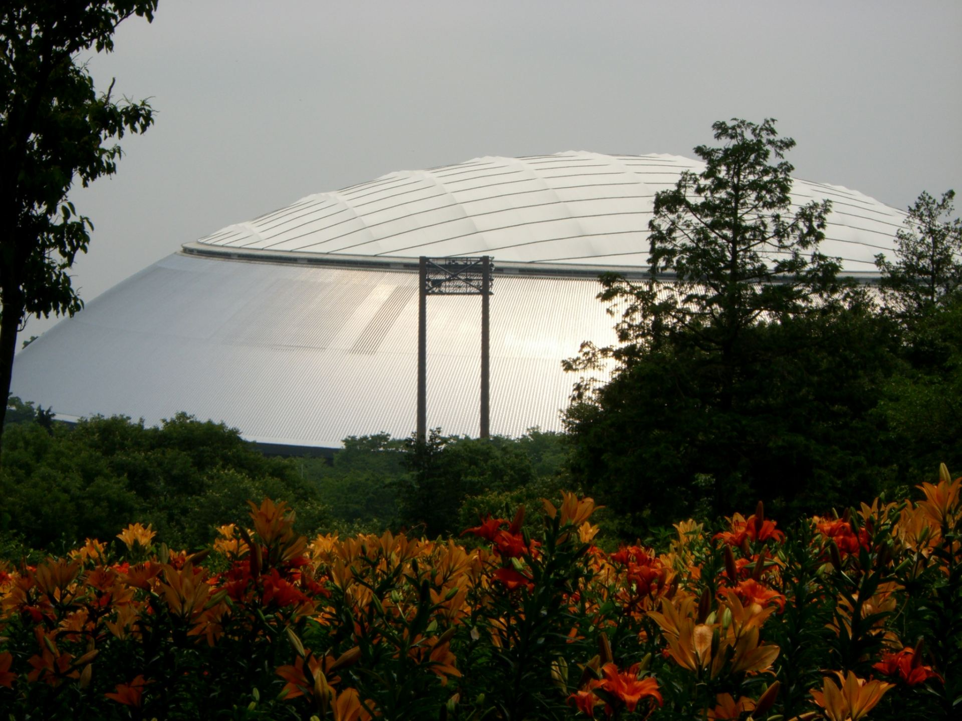 「西武巨蛋」銀色的屋頂和園內百合花遙相呼應