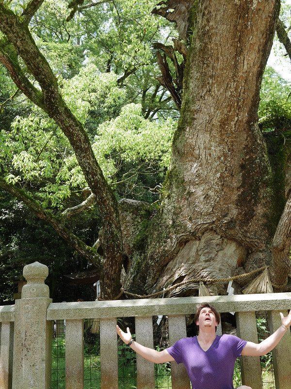 「大山祇神社」樟樹群