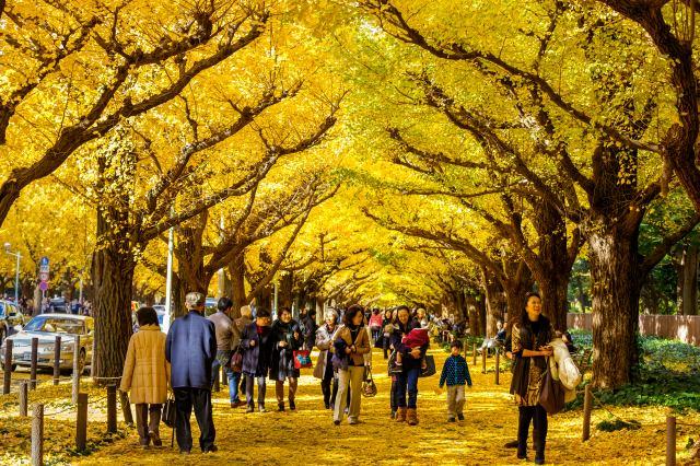 2019年11月日本全國各地的推薦賞楓景點總整理