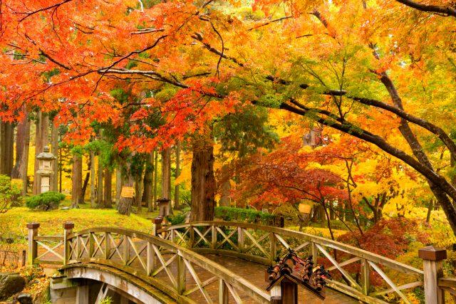 香雪園内的小橋和紅葉