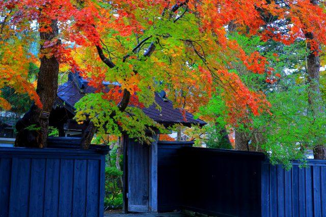 楓葉和黑牆的典雅景緻