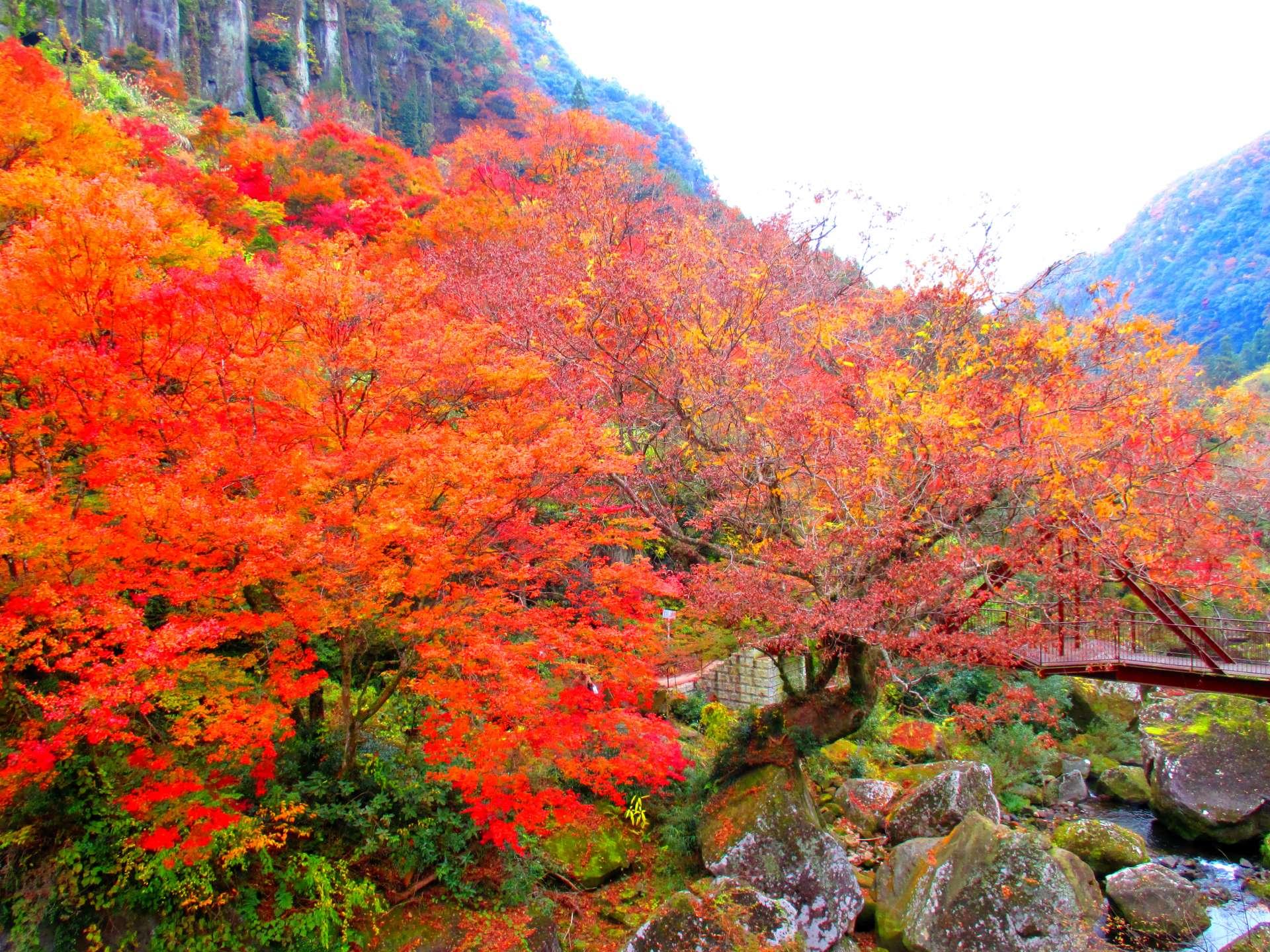 深耶馬溪 一目八景的楓紅絕景