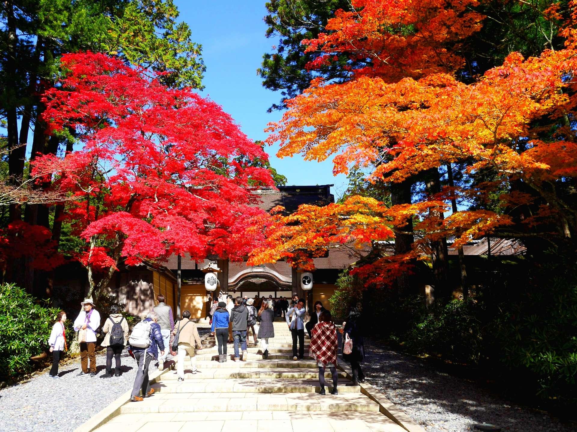 金剛峯寺·表門附近的紅葉