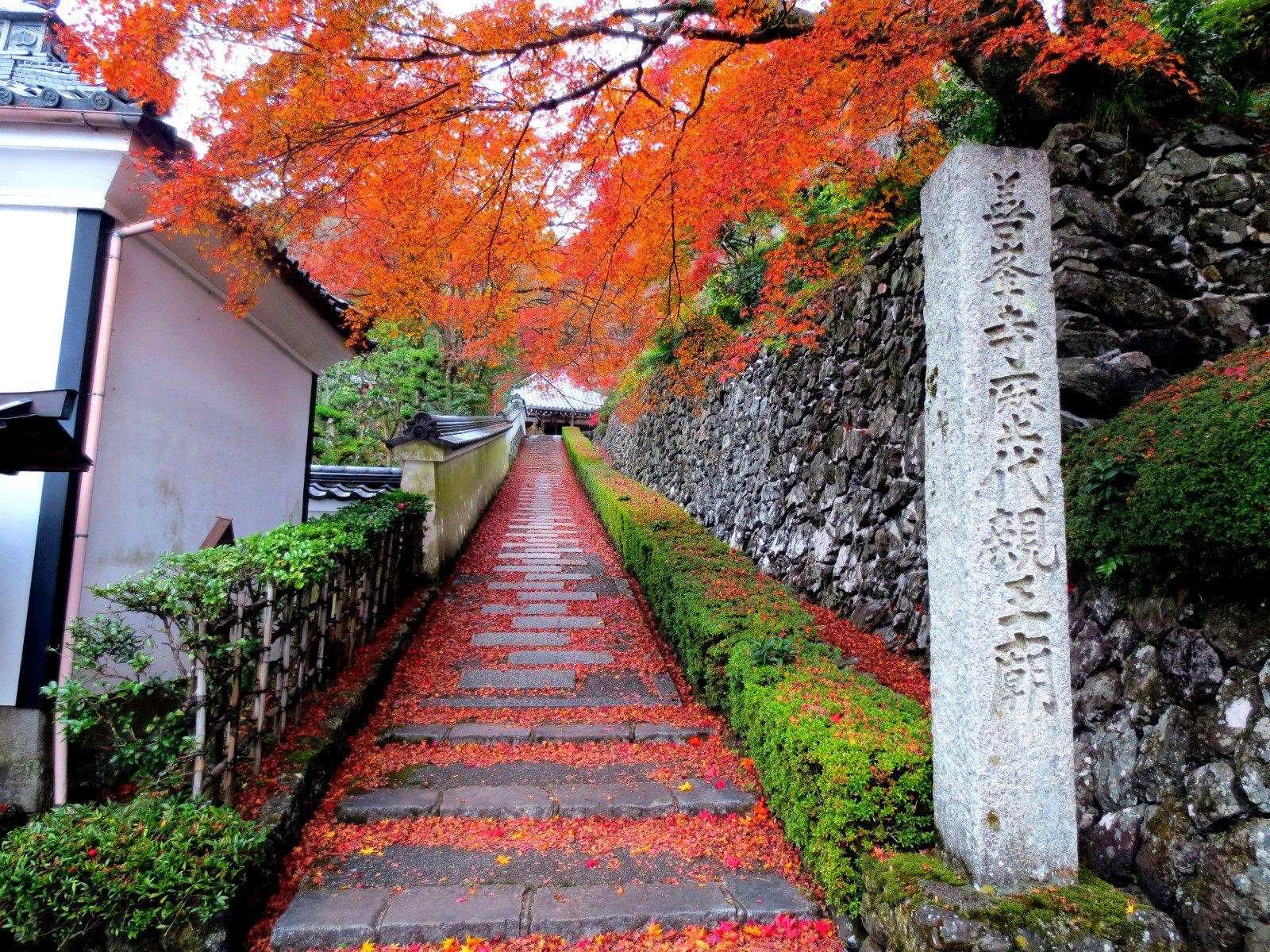 善峯寺 前往經堂的小徑