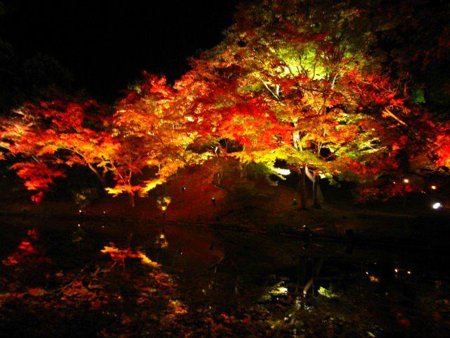 高台寺 夜間點燈