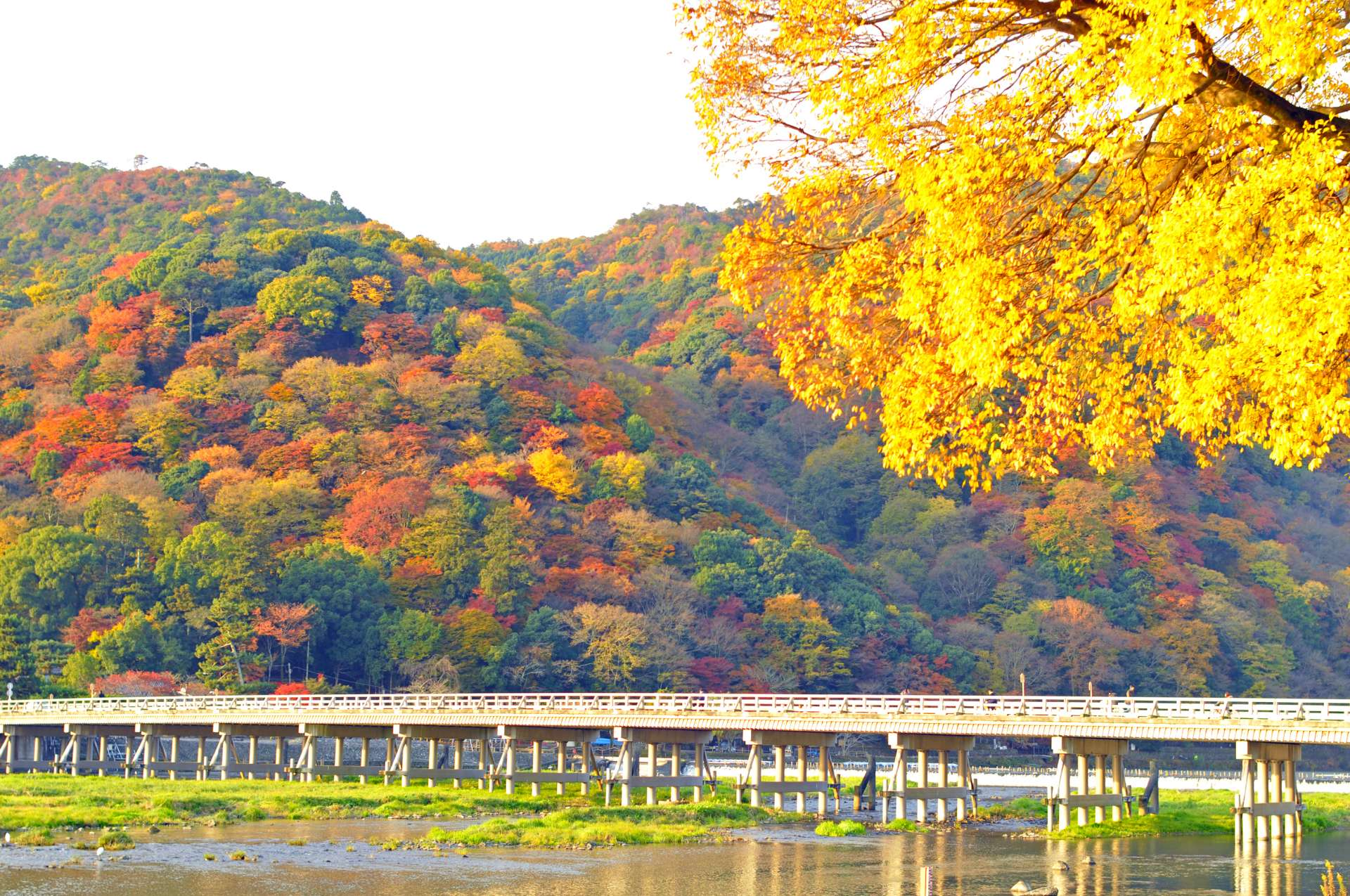 嵐山 渡月橋和紅葉