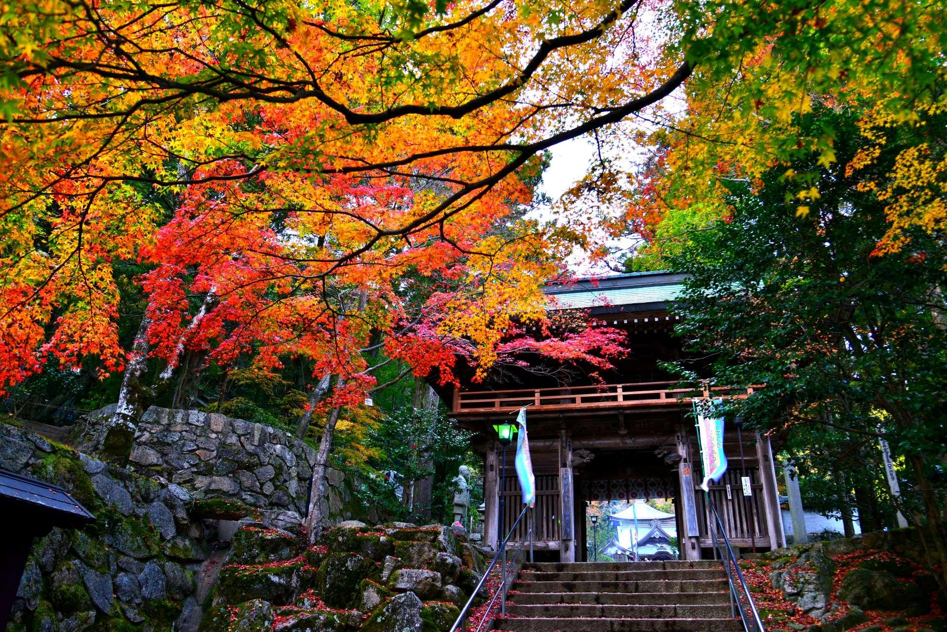 大窪寺 山門和紅葉