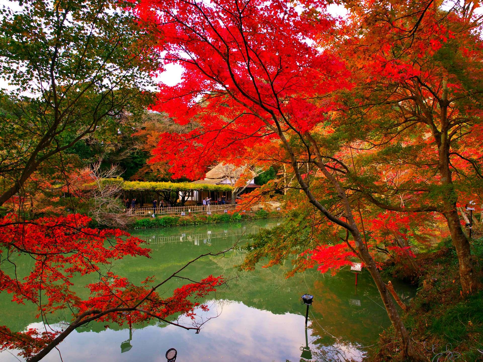 雄偉山麓下的日式庭園 紅葉景緻