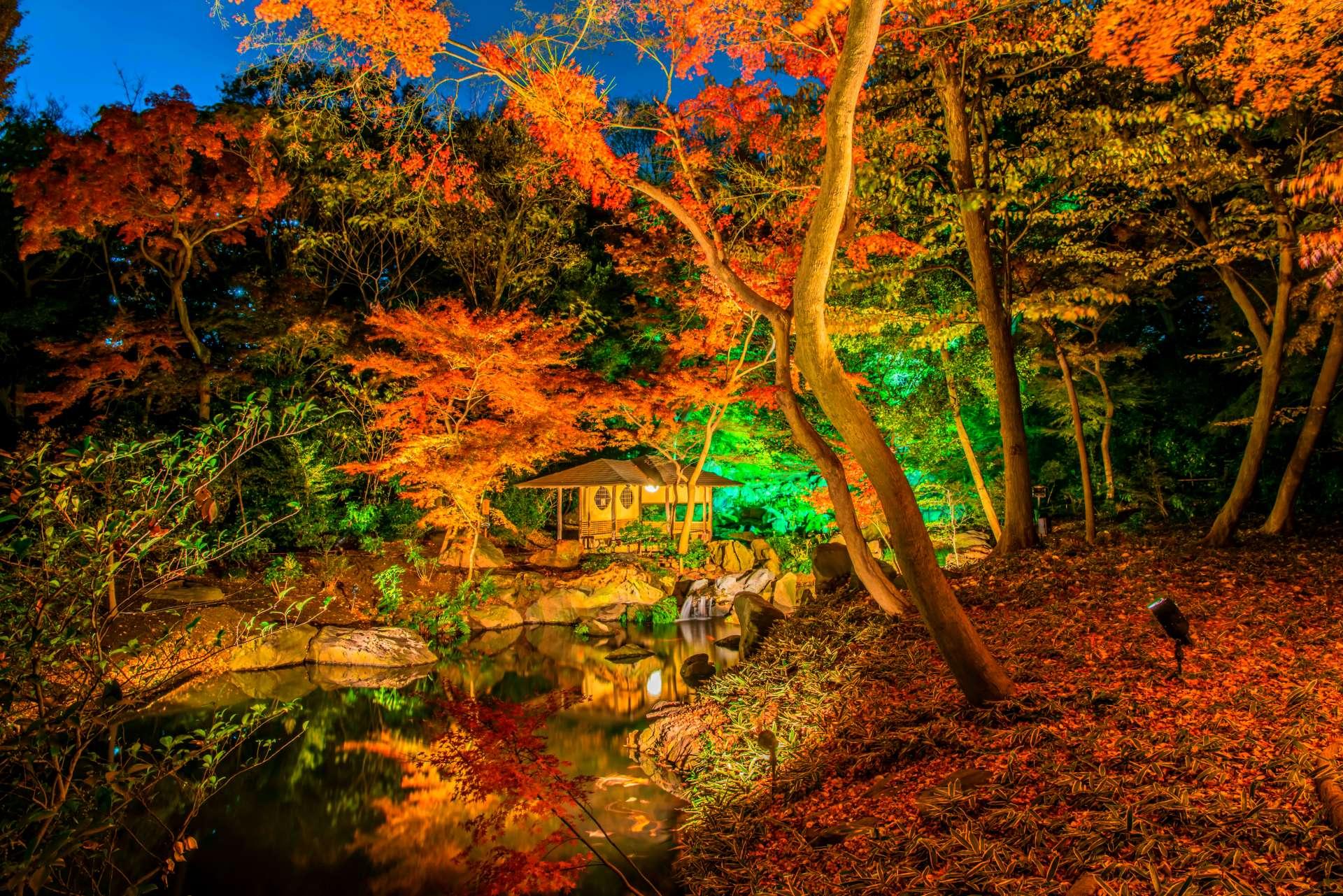 六義園紅葉點燈 夢幻般的絕妙楓景♡