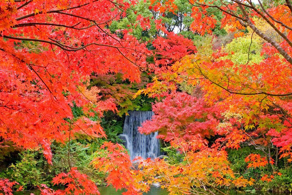 萬博記念公園 紅葉瀑布
