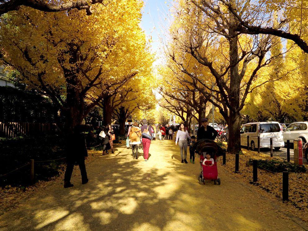 神宫外苑 银杏并木大道