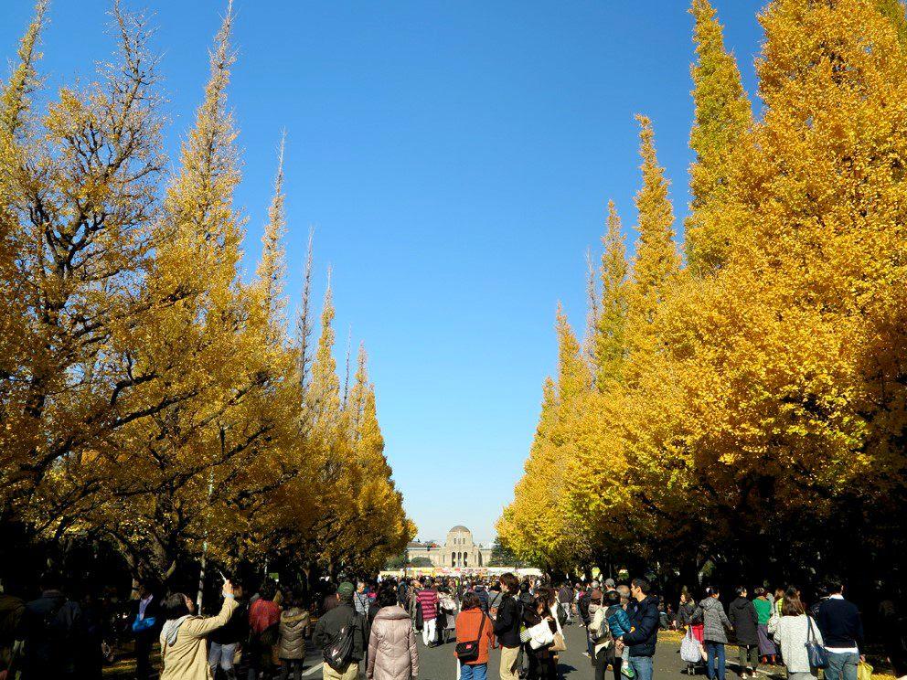 11月深秋时节参访的游客