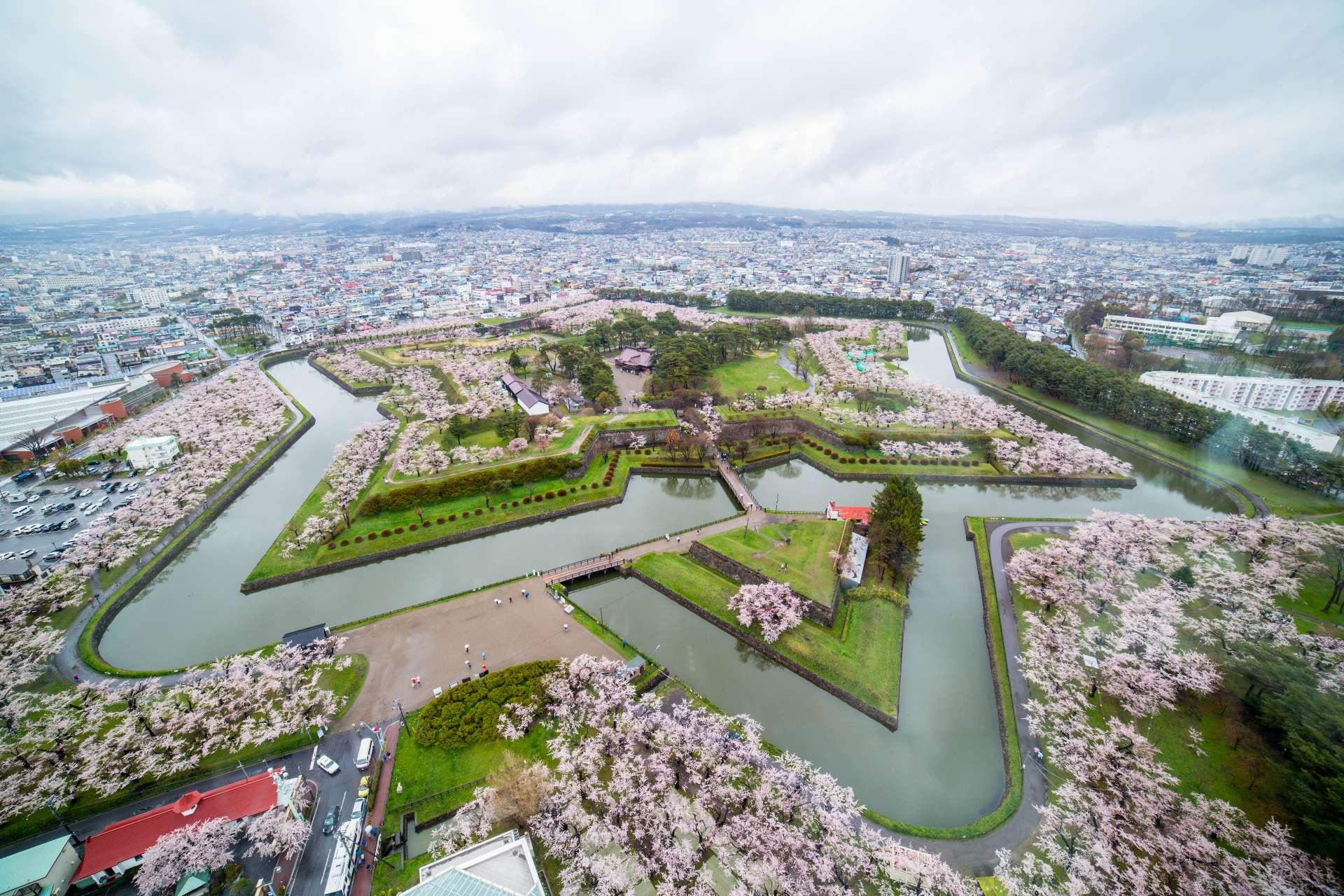 五稜郭公園 櫻花