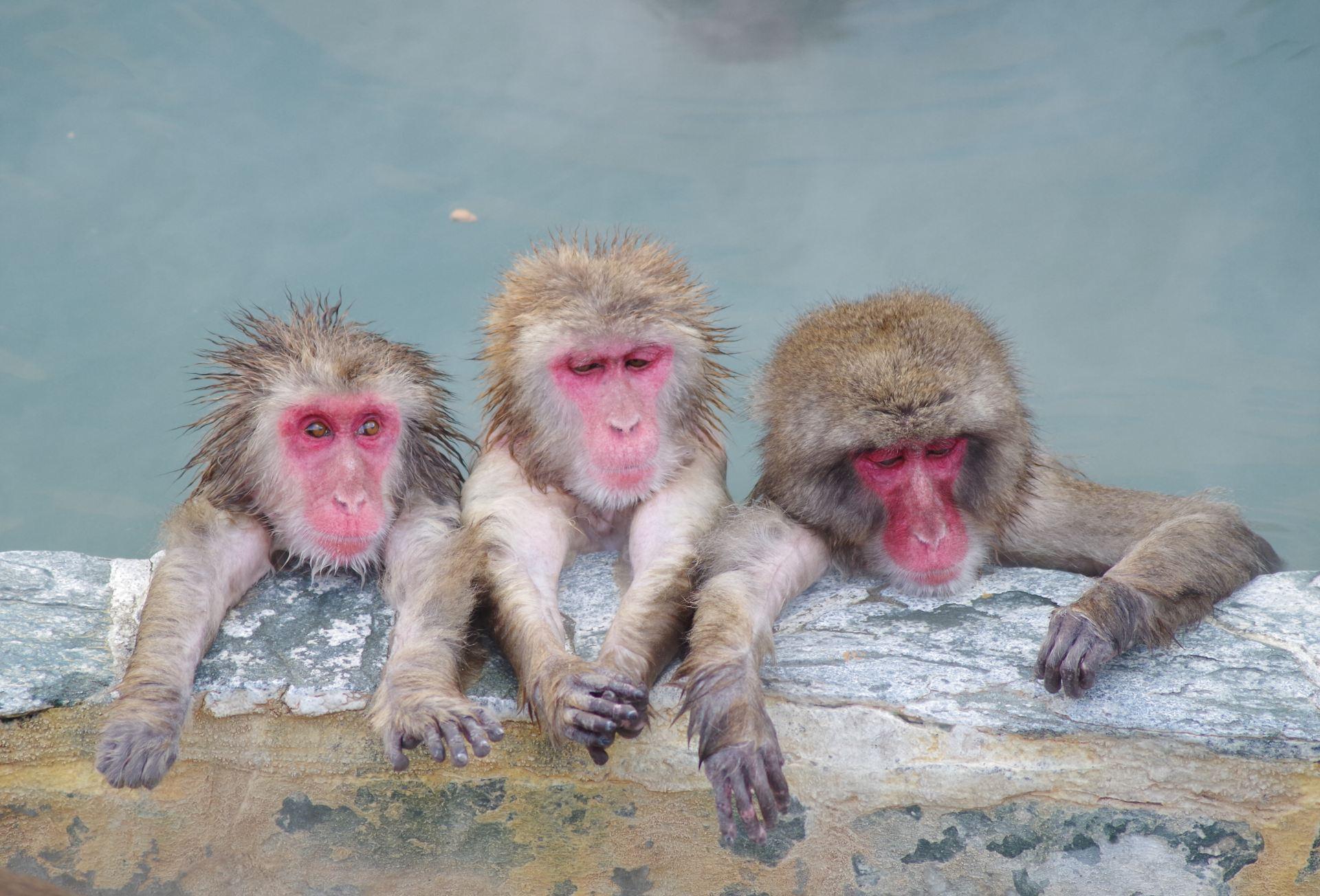 泡溫泉的猴子♫