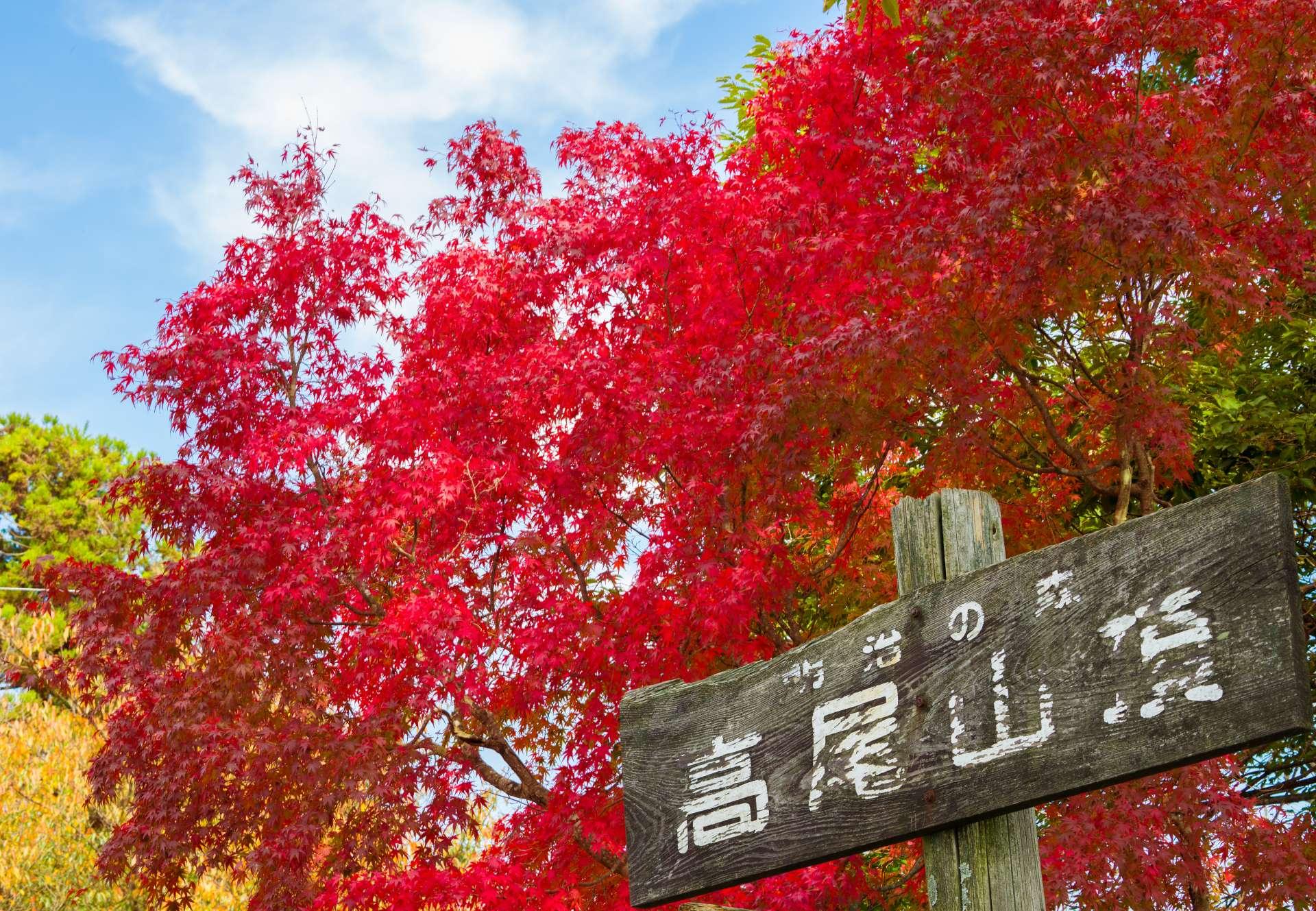 高尾山的紅葉