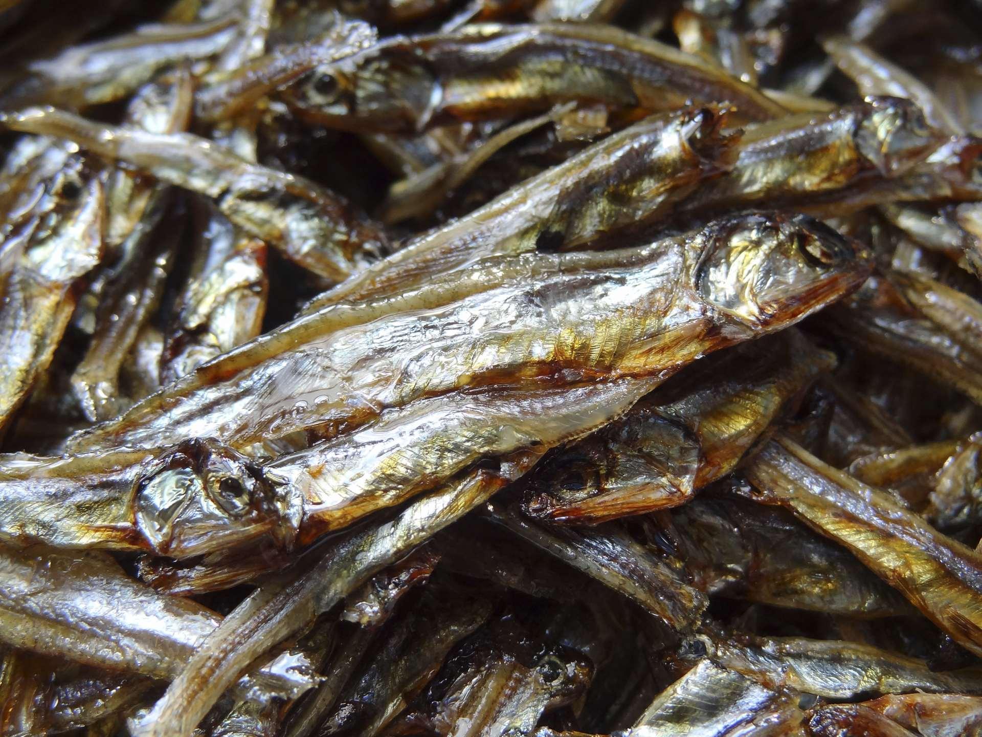 御節料理的代表食材:田作り(小魚乾)