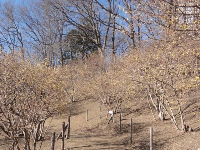 """從遠處乍一看感覺會以為只是""""一片枯木的樹林"""""""