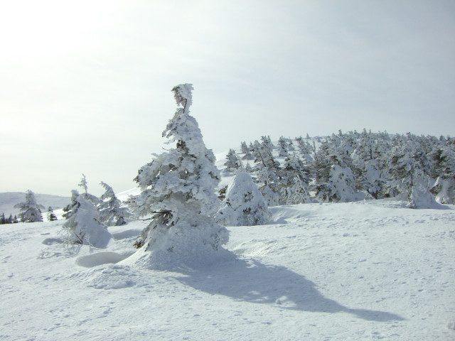 山形冬之艺术:【藏王树冰】鉴赏。