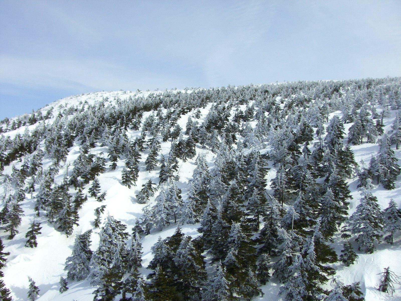 樹冰的全景蔓延了整個山脈