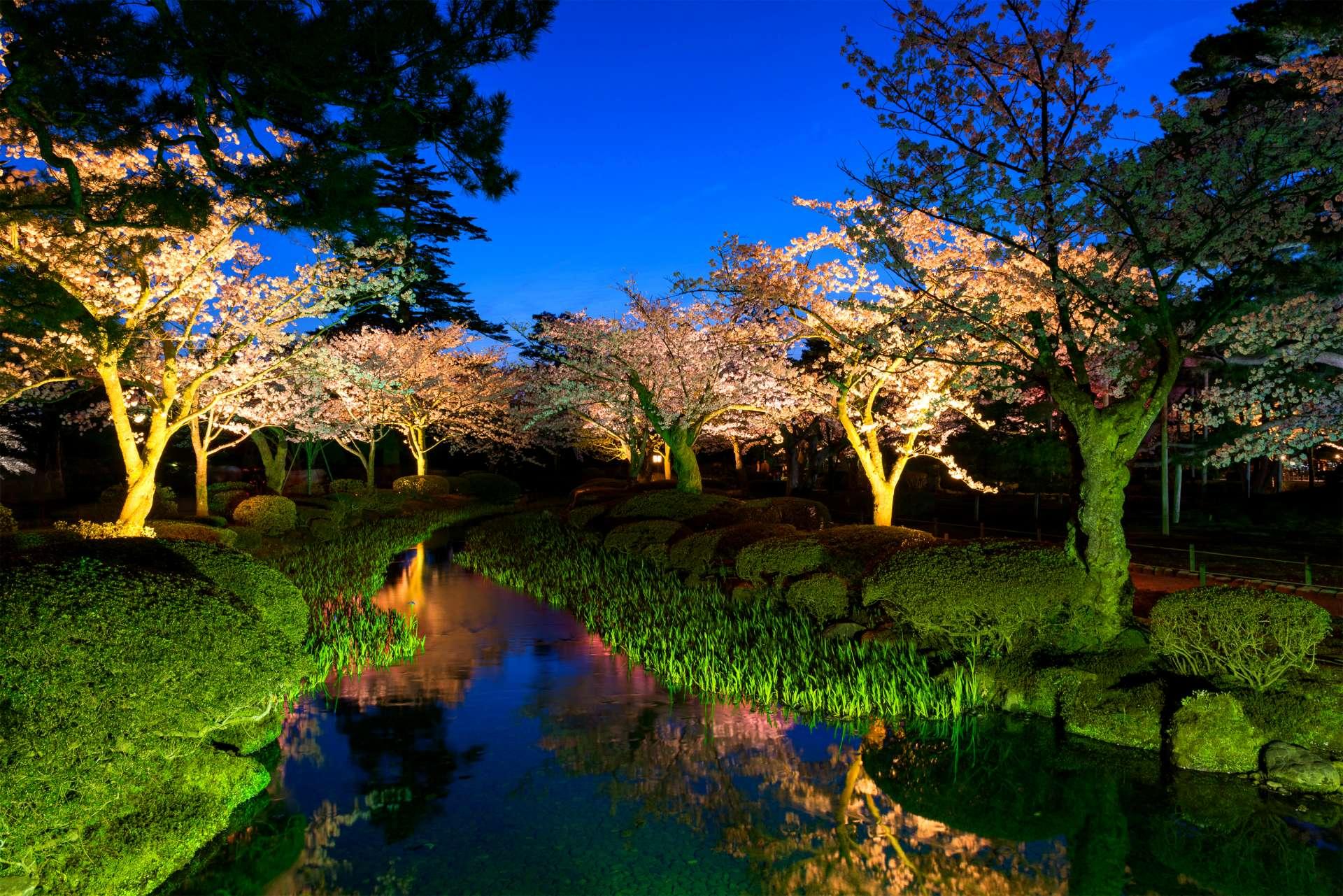兼六園 櫻花點燈