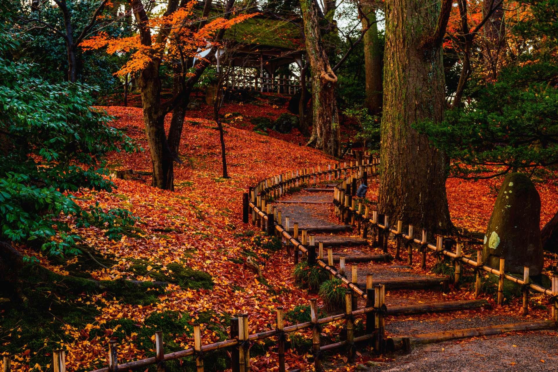 山崎山楓紅美景