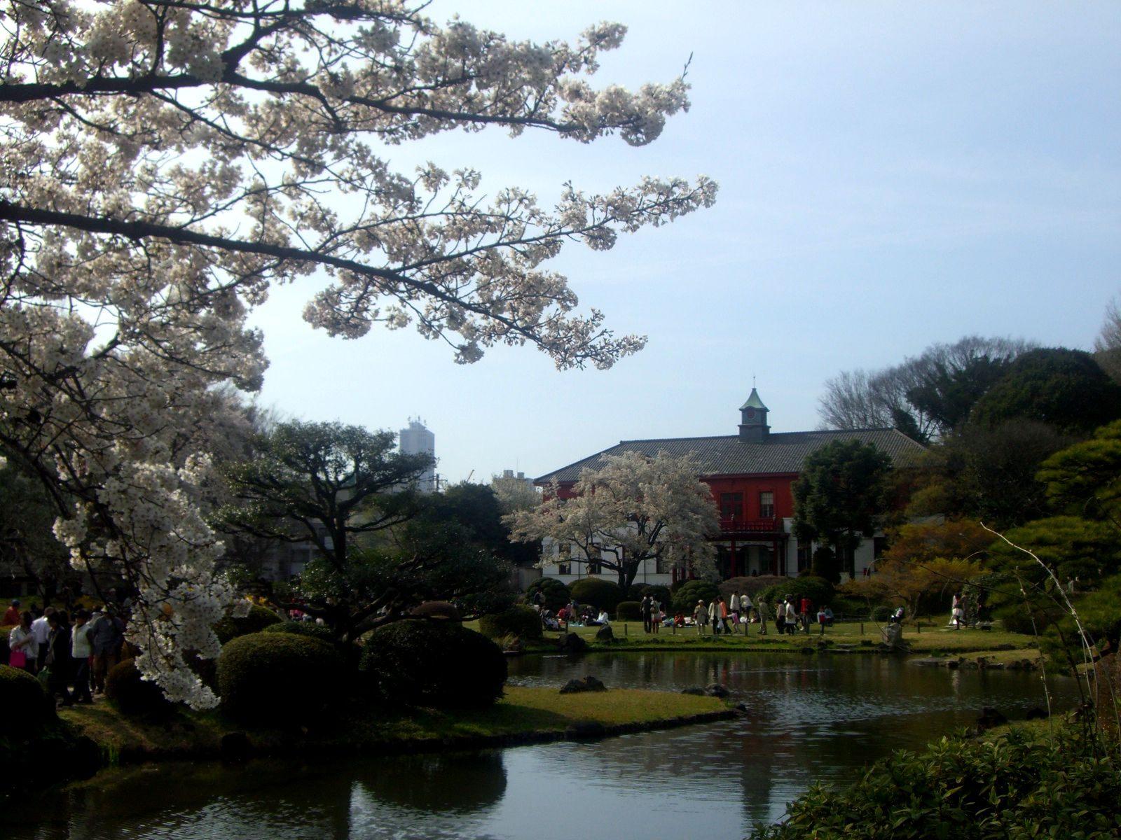 紅色的西式建築×日本庭園×櫻花