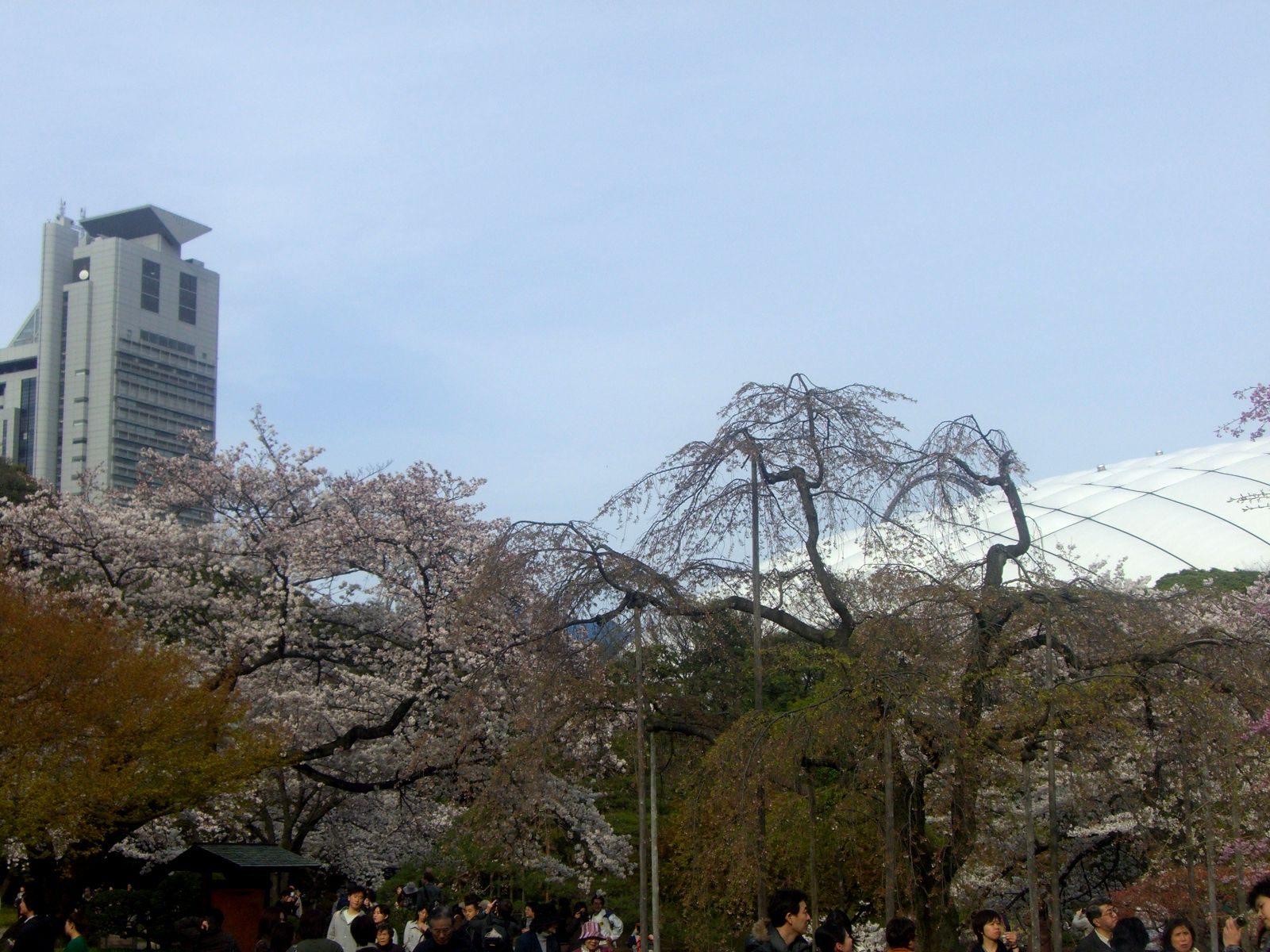 从园内可以看到文京区役所和东京巨蛋