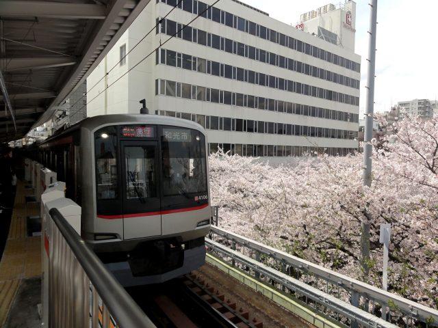 使用東京地下鐵「一日車票」,暢遊東京櫻花景點!