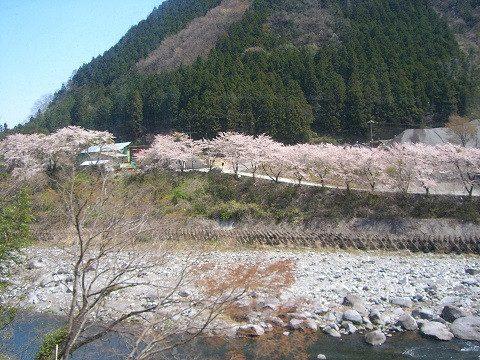 櫻花與油菜花的競演!從東京前往春天的渡良瀨溪谷和足尾的一日遊行程。