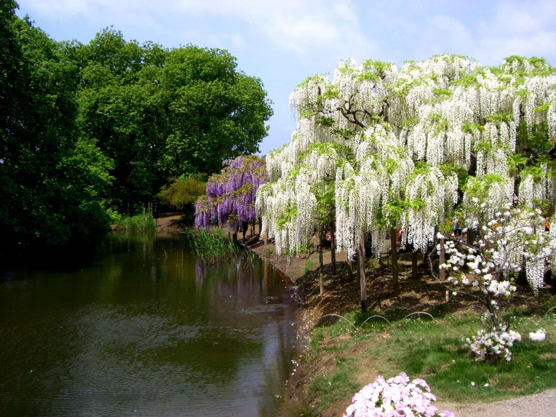除了紫藤花以外,還可以欣賞杜鵑花,石楠花等許多美麗的花卉