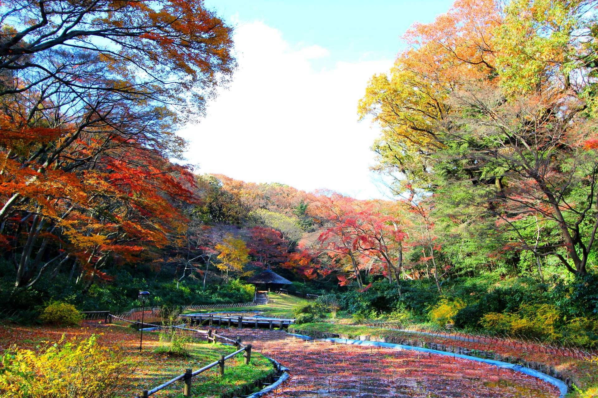 御苑小径和枫叶