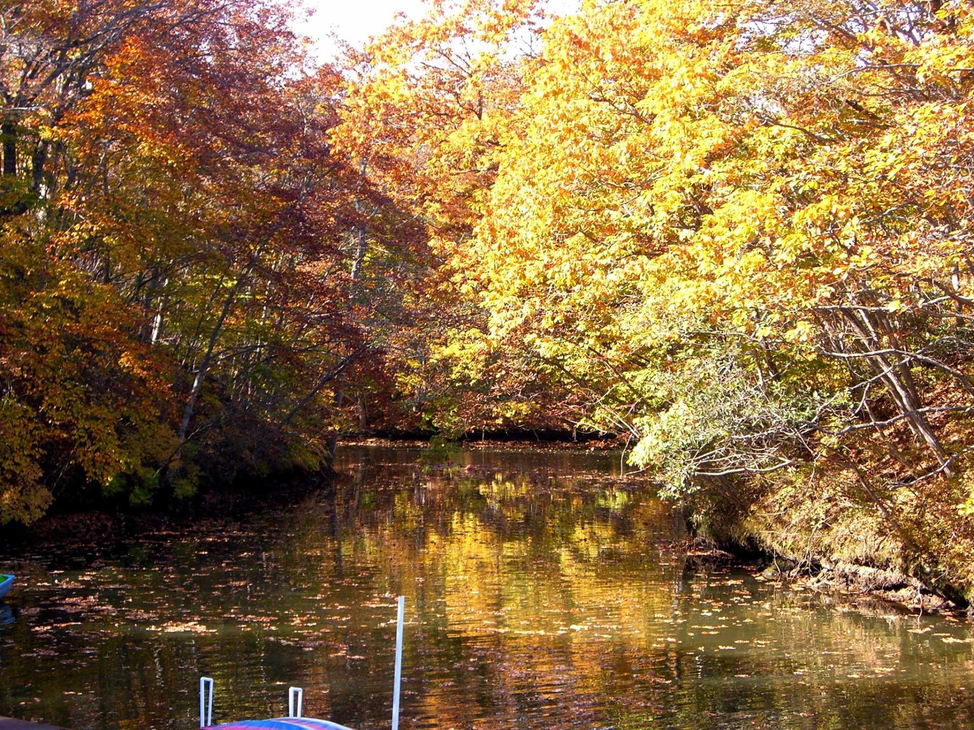 照映在湖面上的紅葉美麗又迷人