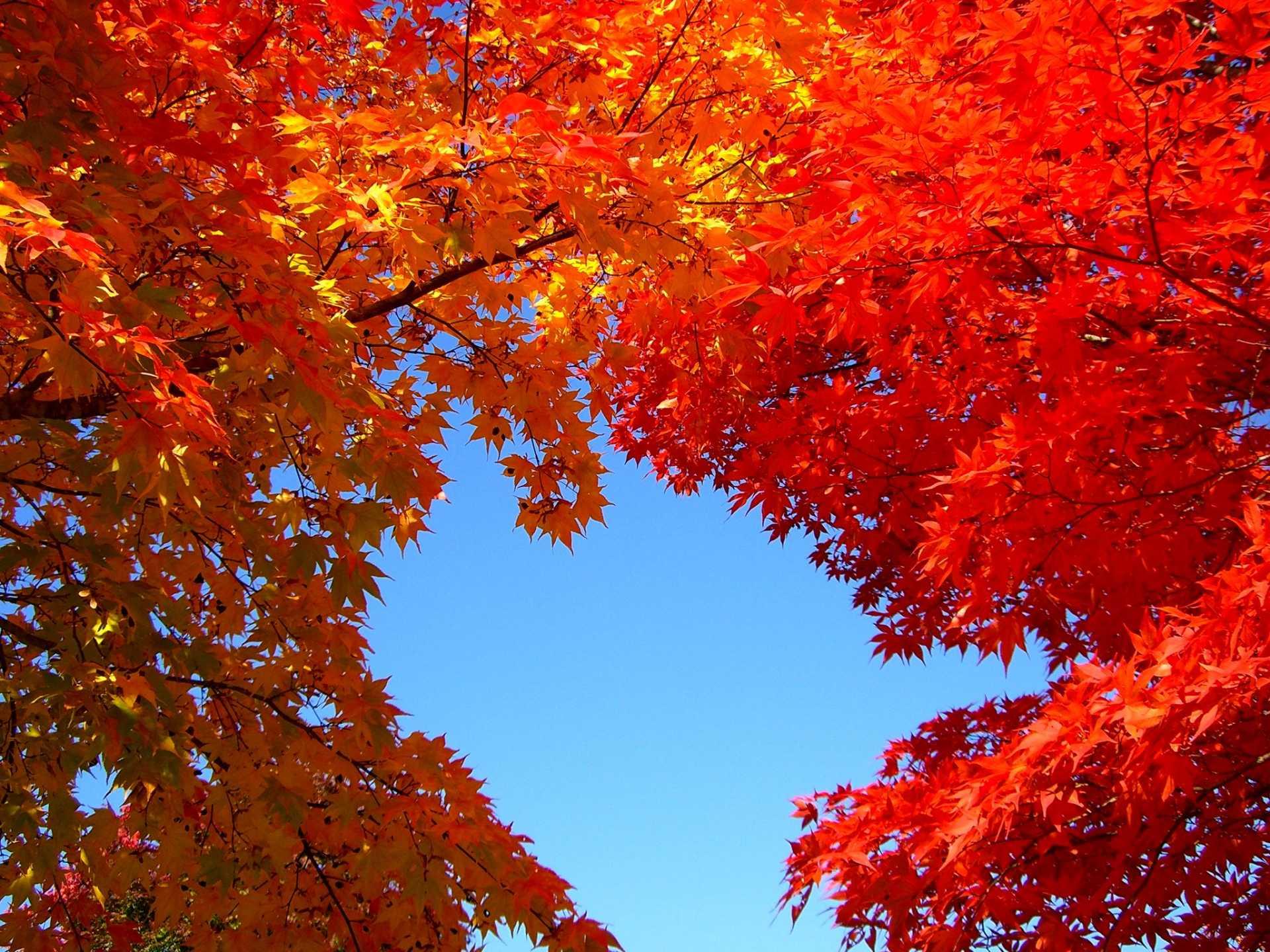 秋天樹木變色後這裡會更加美麗