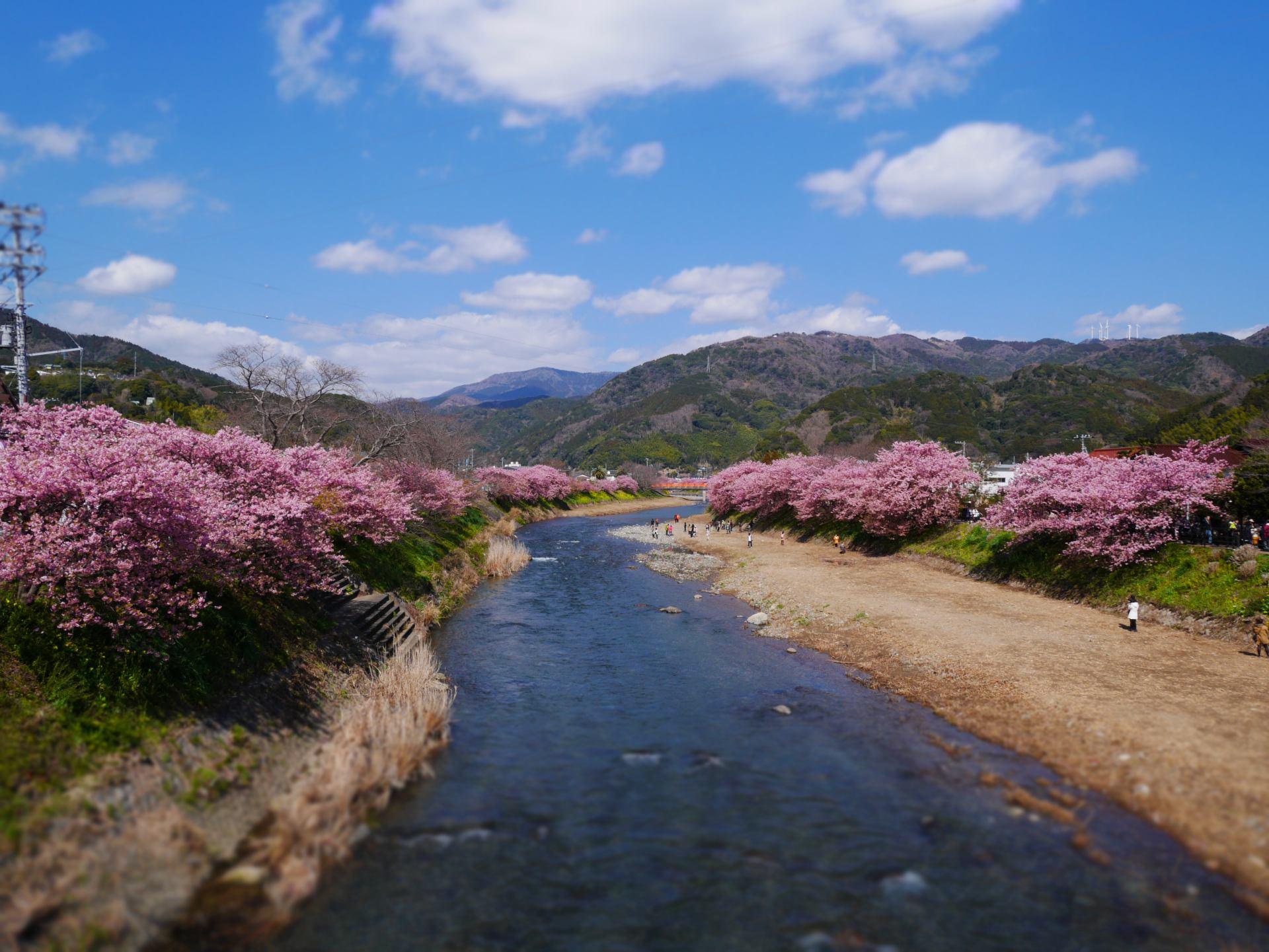 在「來宮橋」上觀賞河川上游的風景