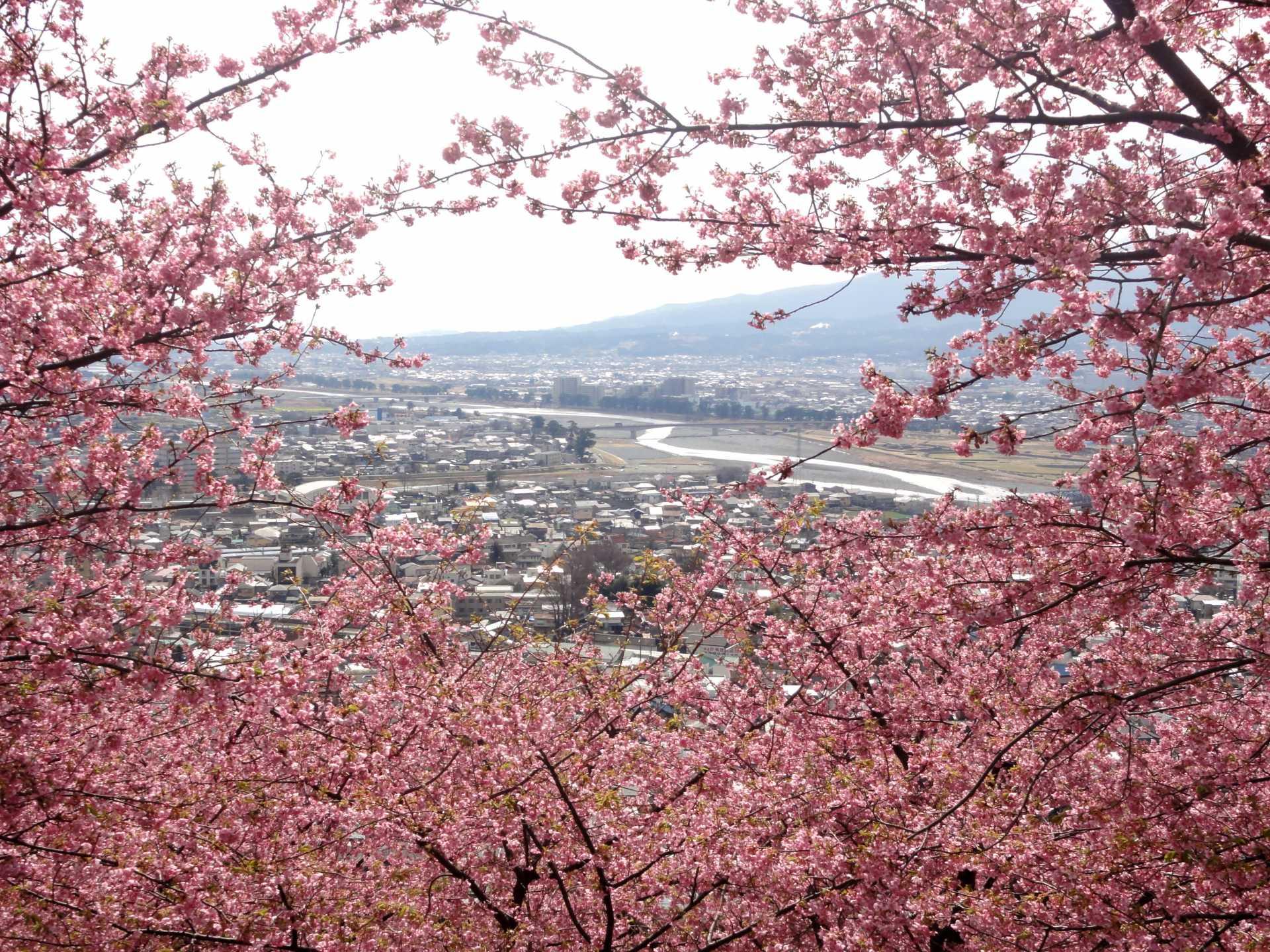 從松田山上拍到的景色