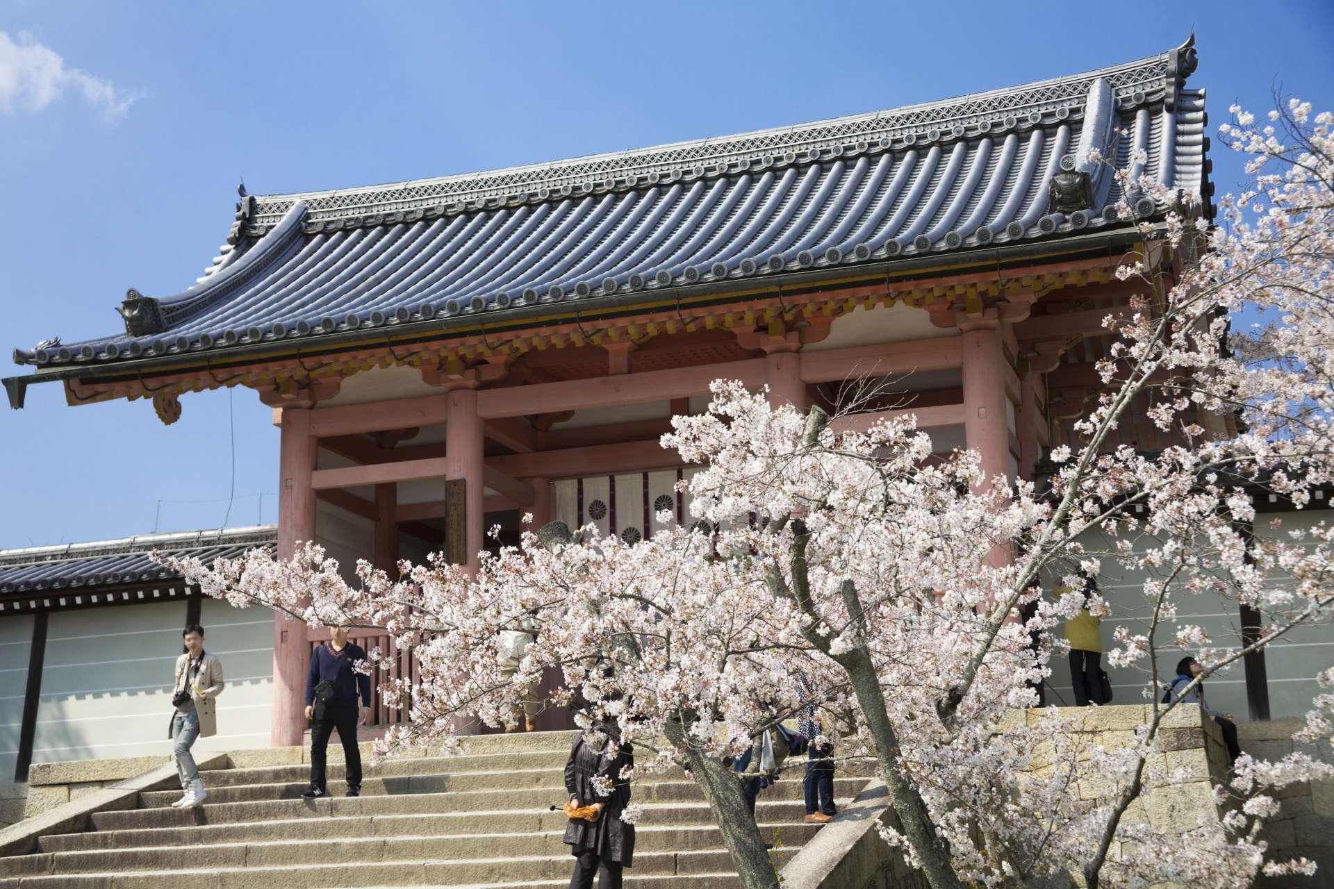 中门的樱花