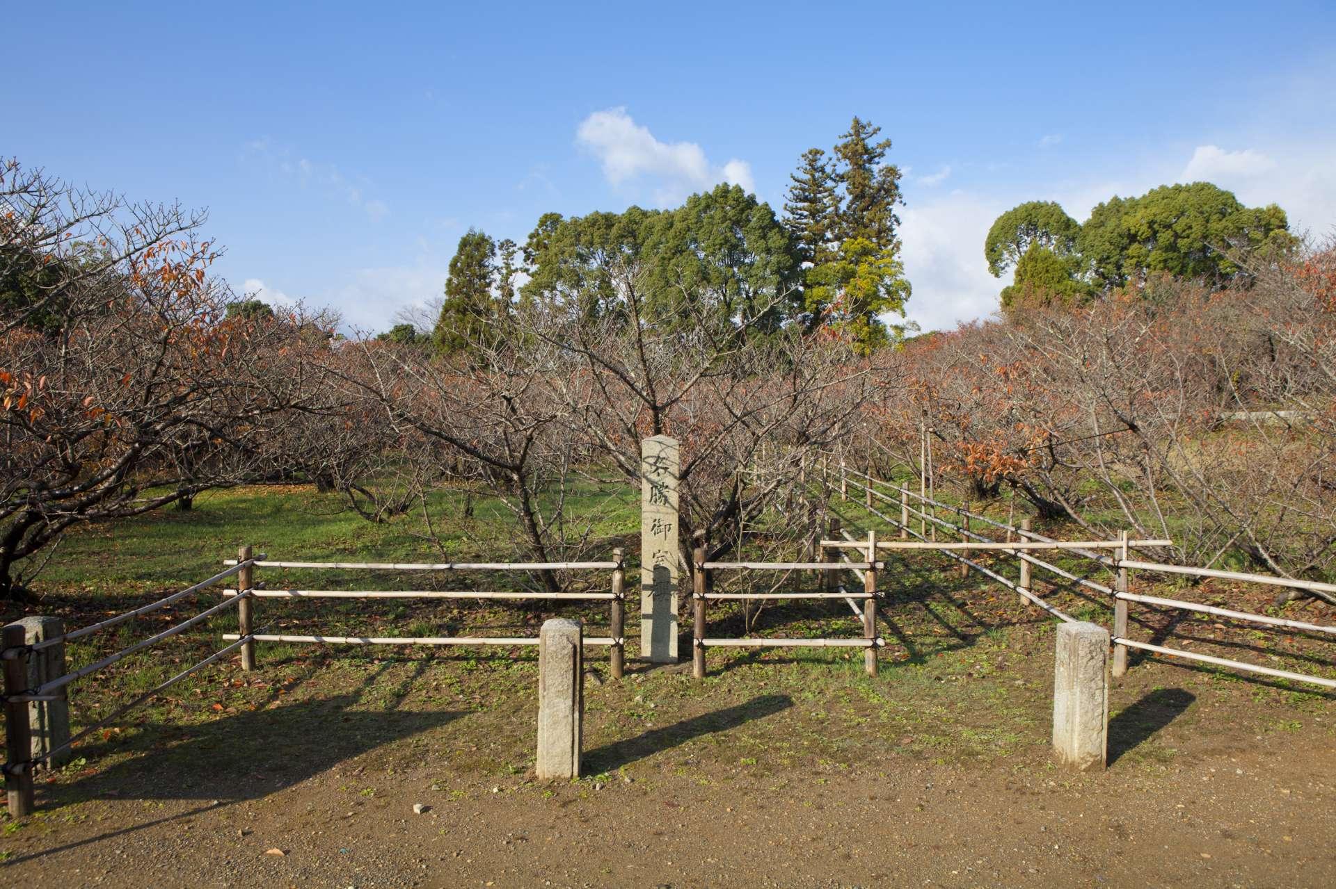 京都最晚开的樱花品种御室樱