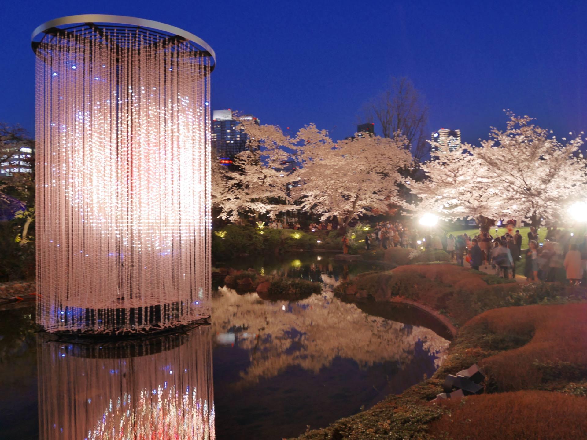 毛利庭園的夜櫻
