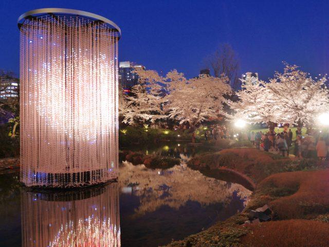 東京六本木之丘森大樓&毛利庭園,白天·夜晚的櫻花美景大比拚!