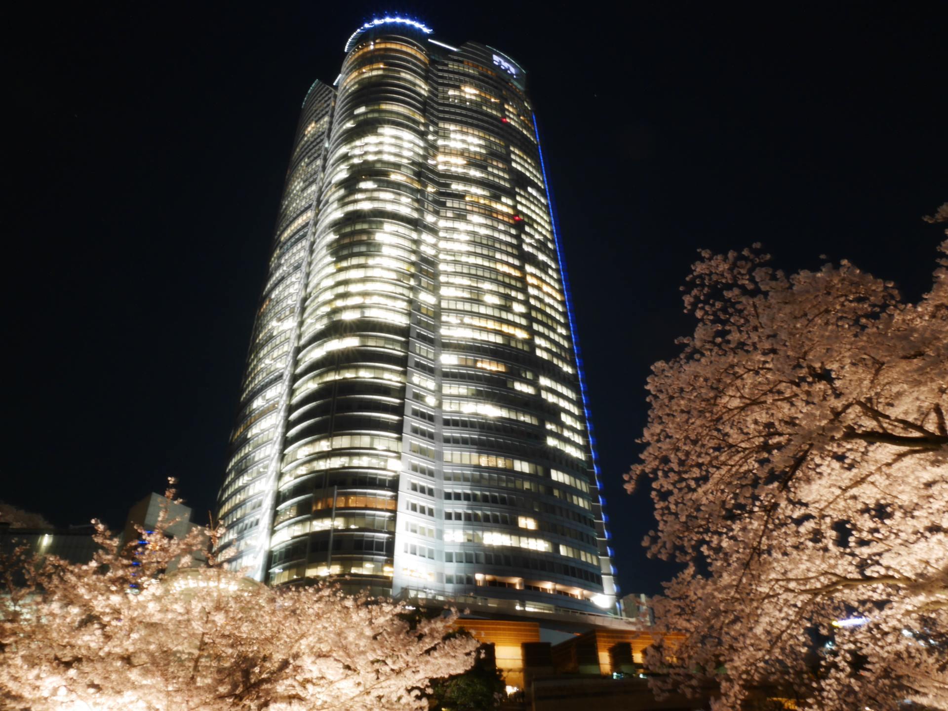森大樓的夜櫻美景