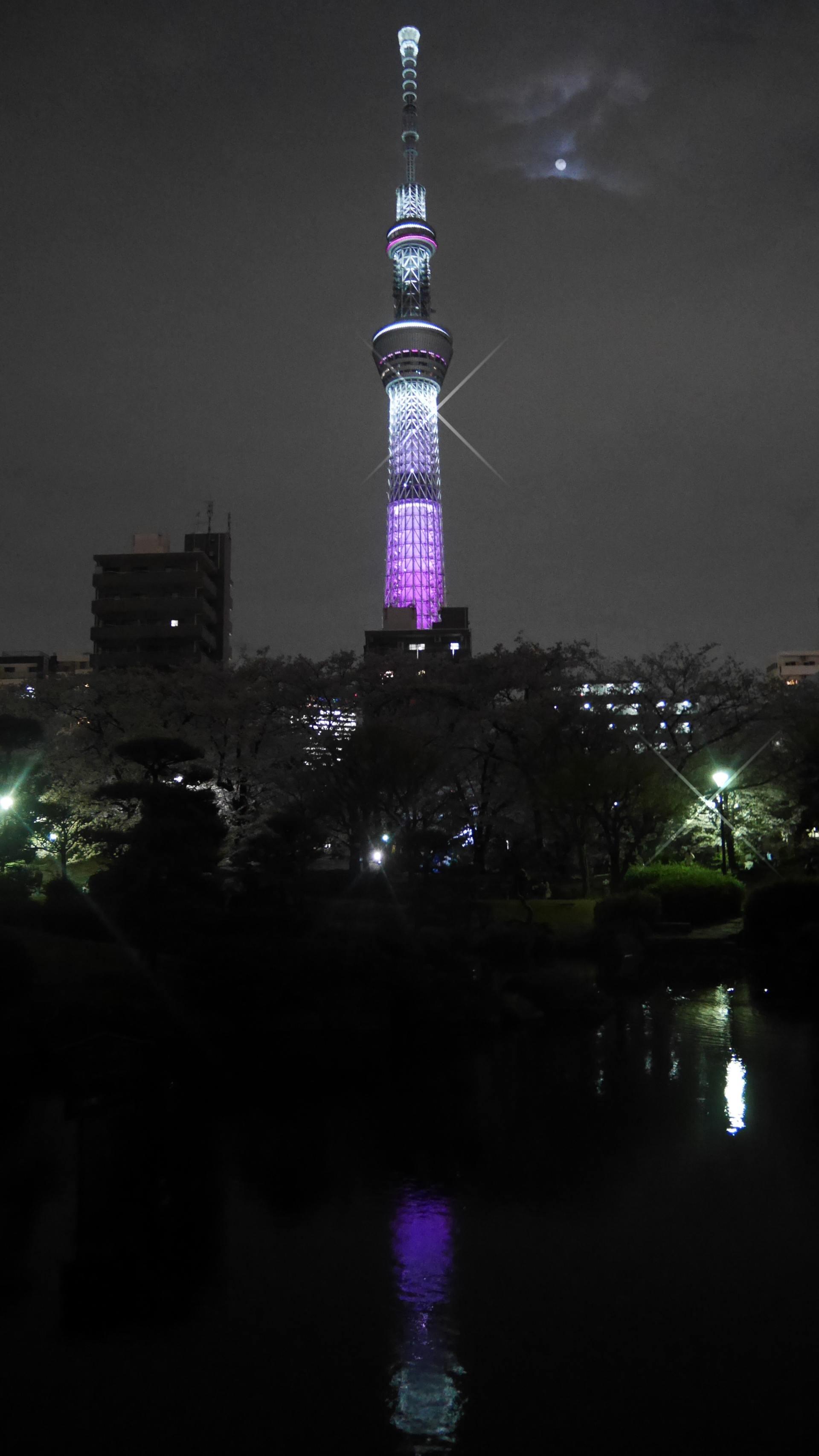 公園內的夜櫻