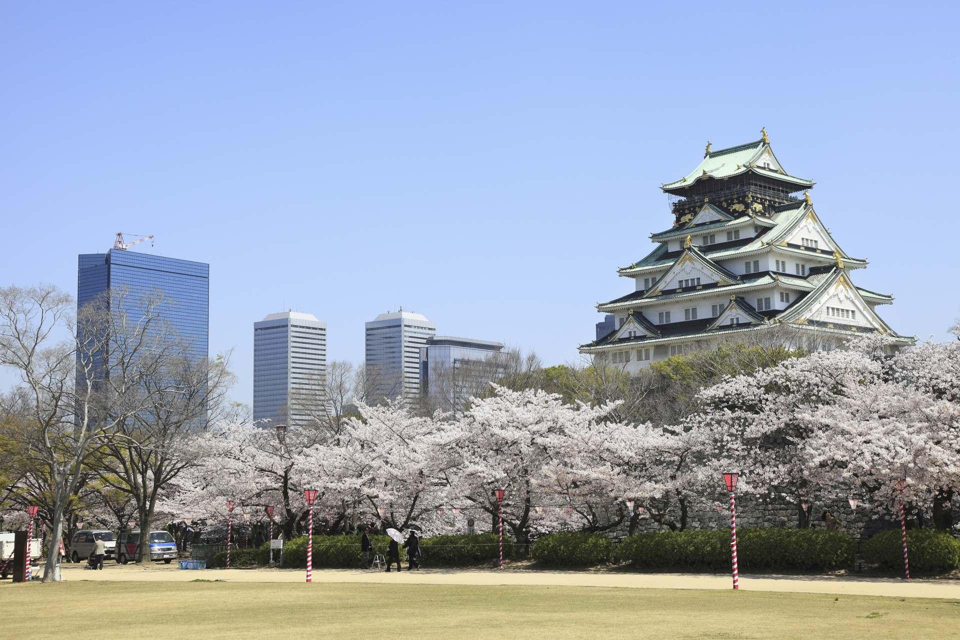 被列入日本賞櫻名所100選的大阪城公園