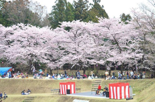 赤城南面千本櫻 櫻花祭