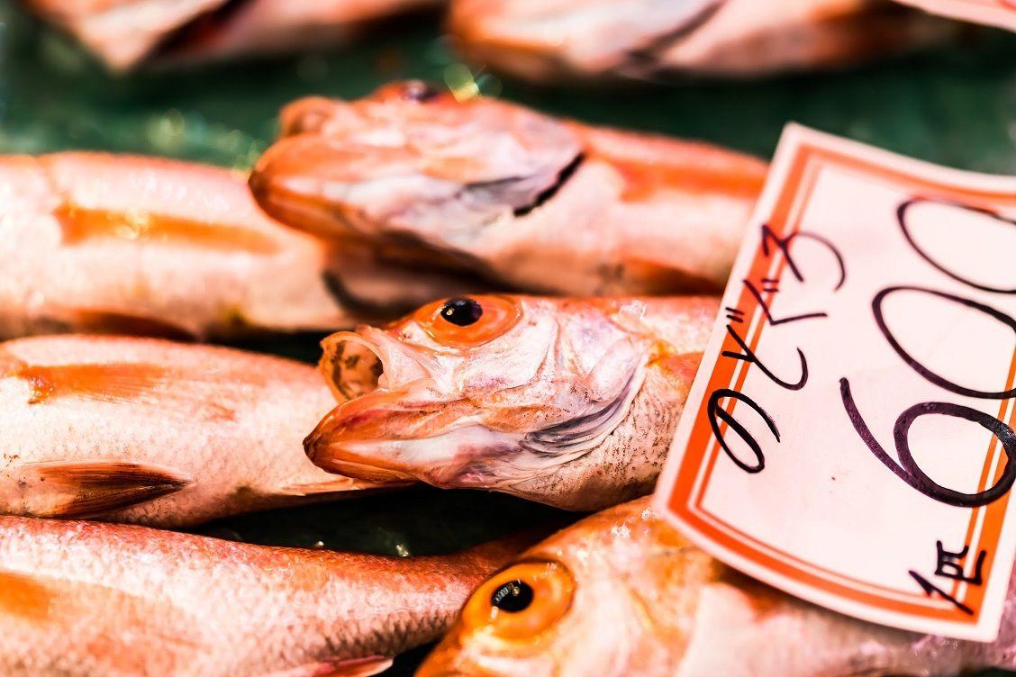 高級魚赤鮭,一條600日圓