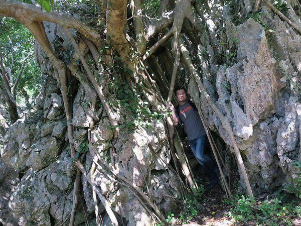 深深紮根於岩石之中的植物