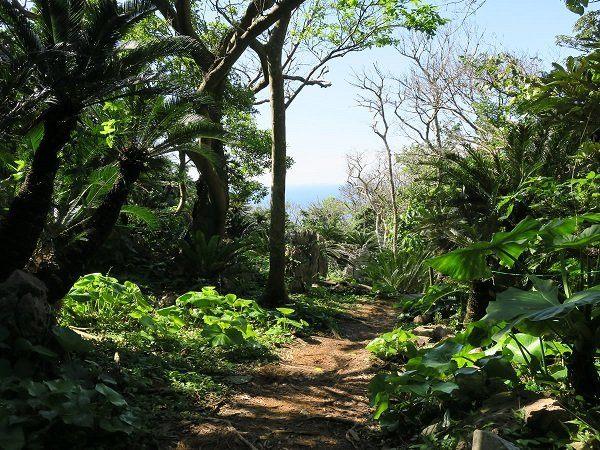 榕樹漫步之行程