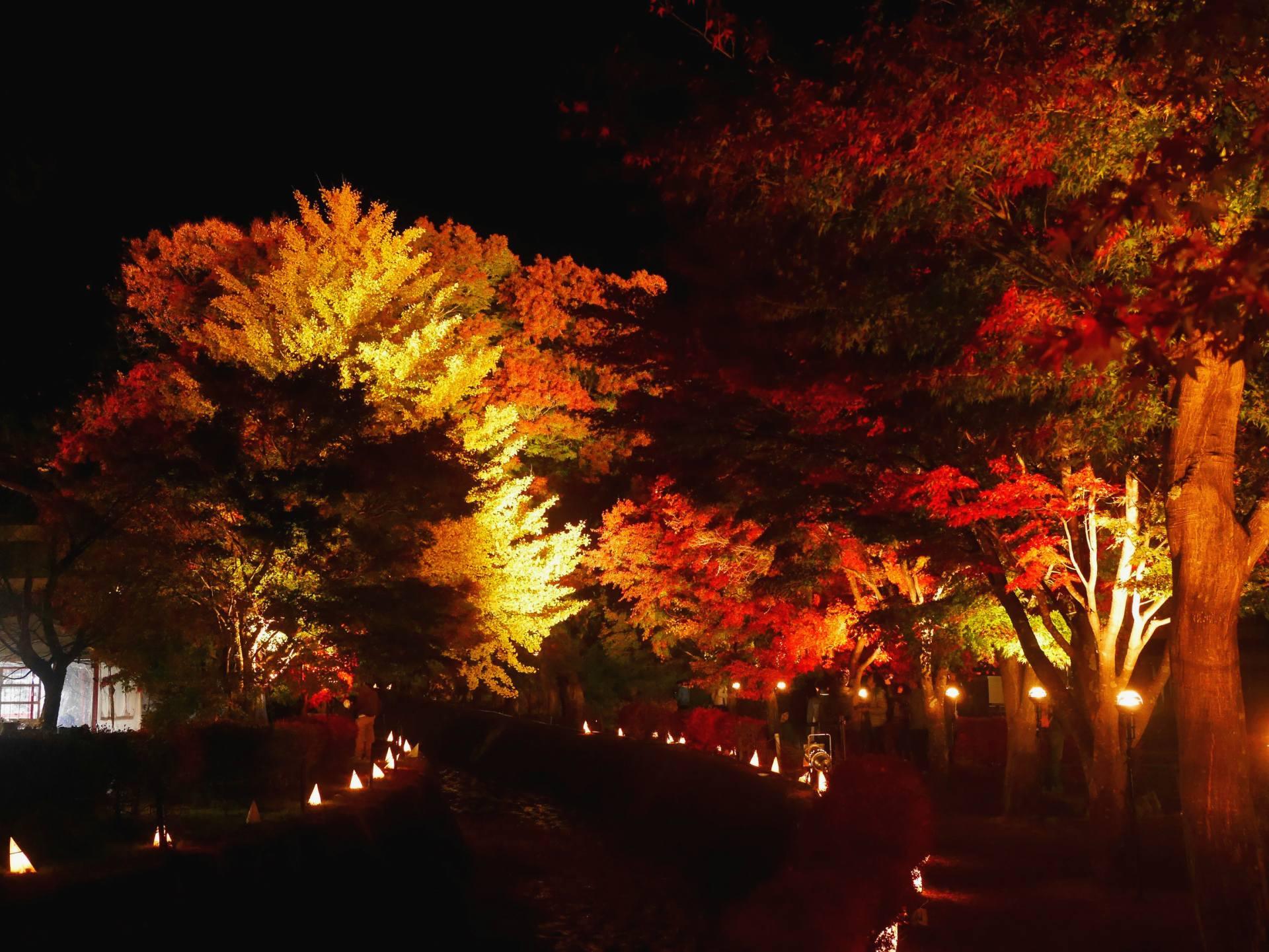 晚上點燈後的楓葉迴廊