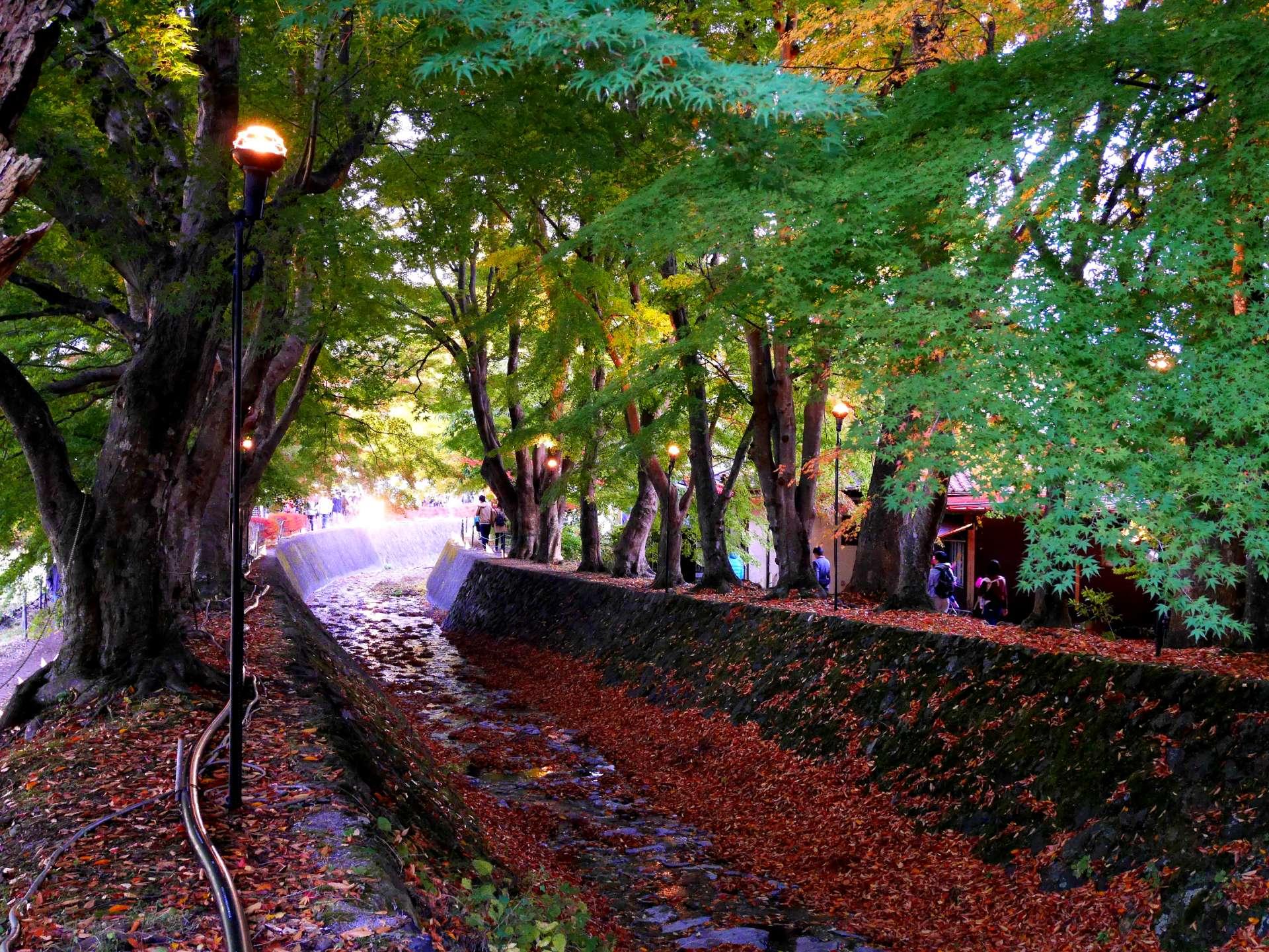 The momiji tunnel