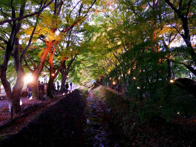 漫步楓葉迴廊