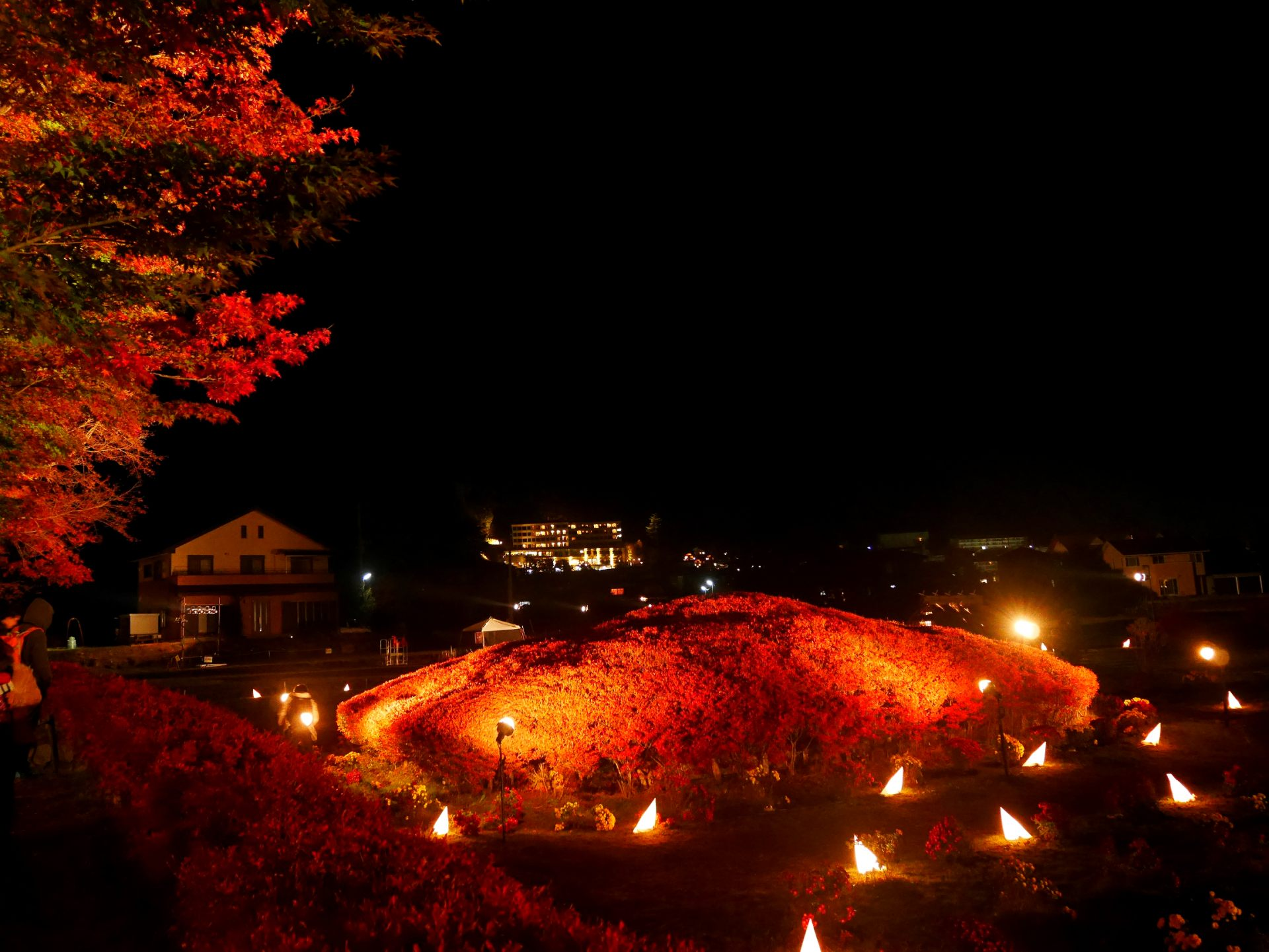 枫叶回廊 夜